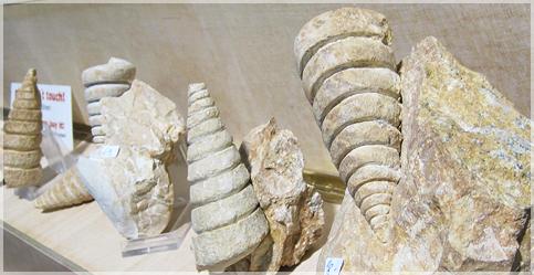 化石もいっぱいありました
